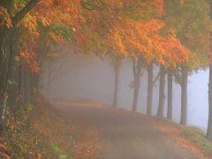 nature_261.jpg
