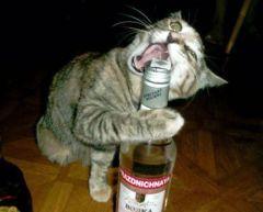 bottleopener.jpg