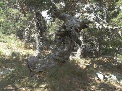 Un copac rupt