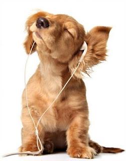 muzica pentru caini de companie
