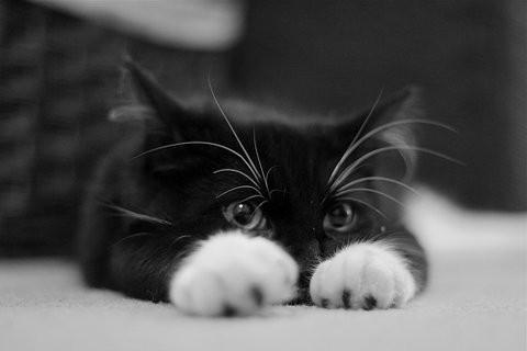 pisica-sfioasa