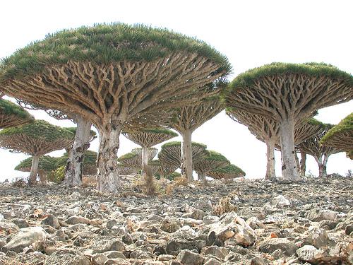 Insula Socotra