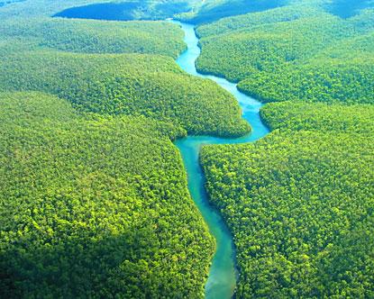 Amazonul, Brazilia