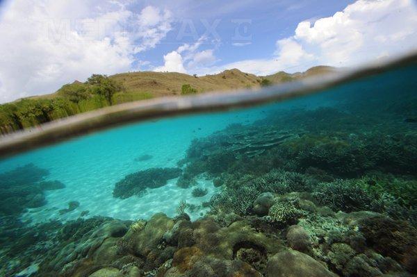 Insula Komodo