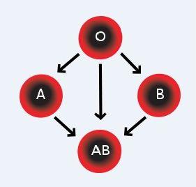 Compatibilitatea grupelor de sange
