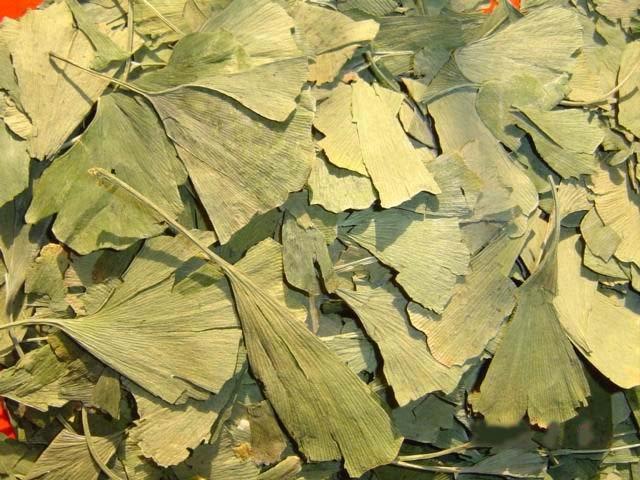 Frunze uscate de ginkgo biloba pentru ceai