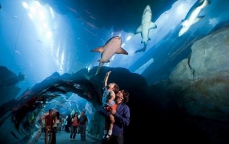 Dubai Aquarium & Discovery Centre, Dubai, Emiratele Arabe Unite