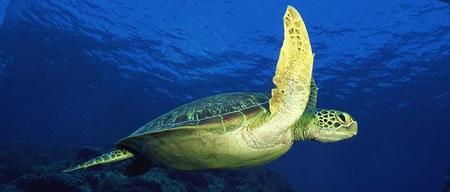Protejarea animalelor pe cale de disparitie, un principiu al ecoturismului
