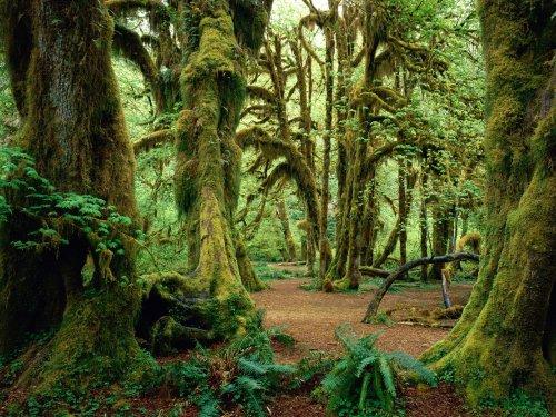 Parcul National Olimpic din Washington