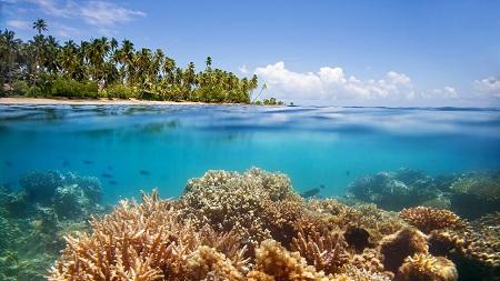 Recif de corali in Fiji