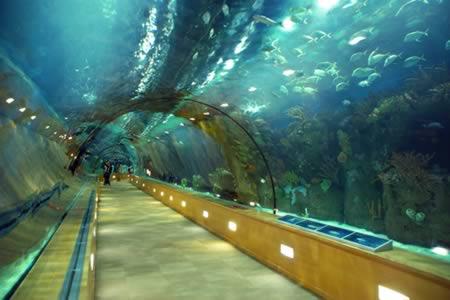 Tunelul subacvatic din L'Oceanografic, Valencia, Spania