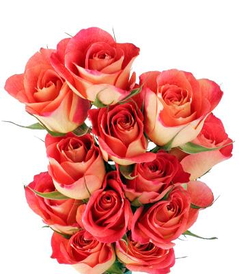 Trandafirii coral