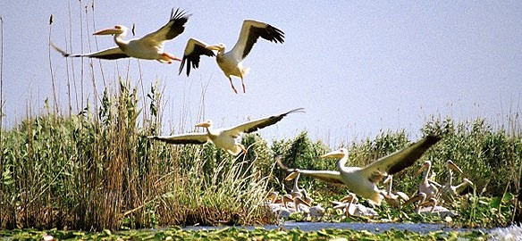 Parcul National Delta Dunarii