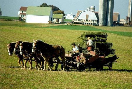 Munca la ferma, ocupatia de baza a familiilor Amish