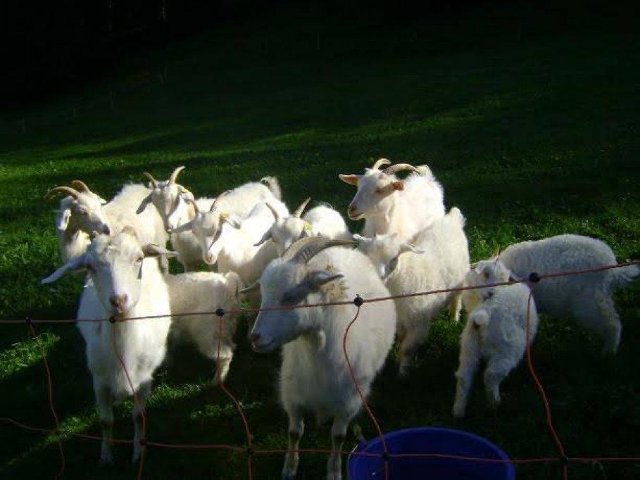 Animale- vanzare cu plata in rate