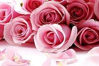Vanzari engros de flori taiate in Timisoara