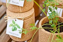 Vas de plante din pluta – Capsuni