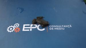 EPC Mediu