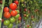Un sistem bun de irigat pentru grădina ta de legume