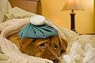 Recuperare rapidă pentru animalul de companie cu FanVet