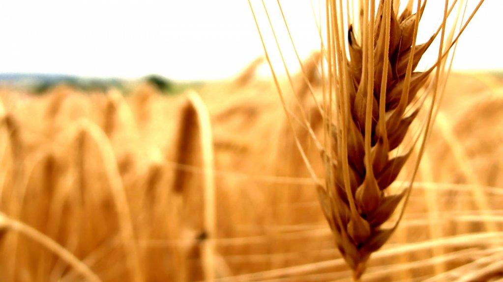 Caracteristicile selectorului de cereale perfect