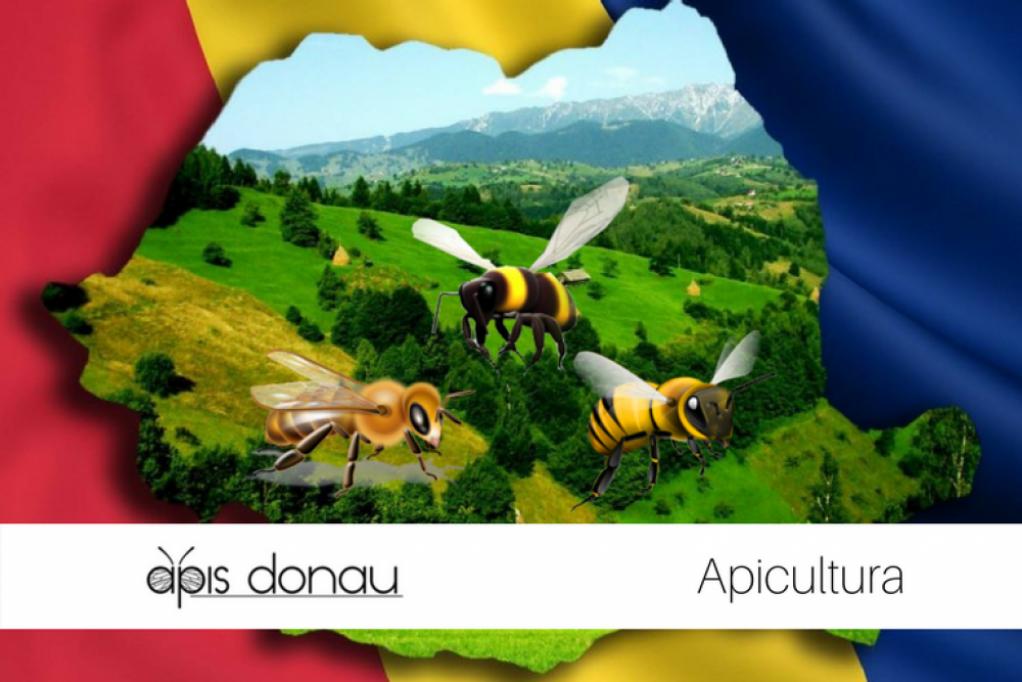 Ce albine cresc apicultorii romani?