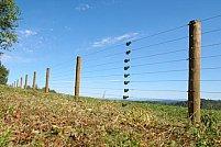 5 motive pentru a achiziționa un gard electric pentru animale