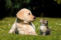 Animal fericit, datorita unui stapan atent – afla ce pet shop este potrivit pentru cumparaturile frecvente dedicate animalelor de companie