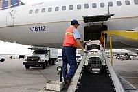 Cum poti transporta animalele de companie cu avionul in conditii sigure