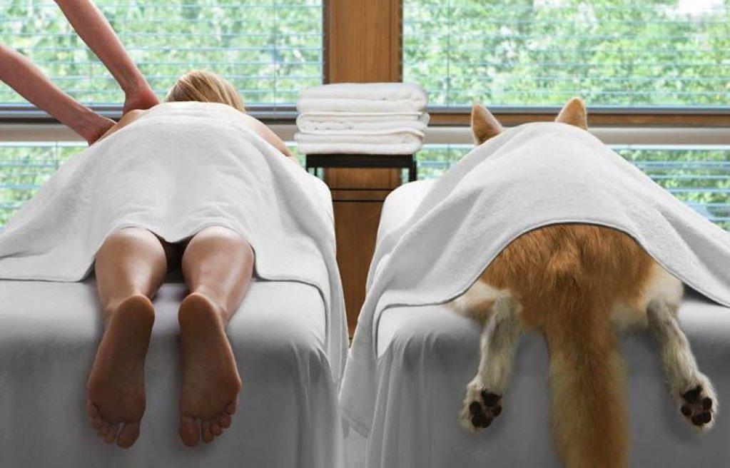 Pot pisicile si cainii sa beneficieze de masaj ca si oamenii?