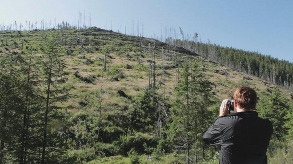 """""""Lemn""""/""""Wood"""", filmul care vorbește despre tăierile ilegale de păduri din România"""