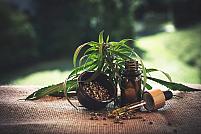 5 beneficii și întrebuințări terapeutice ale uleiului CBD