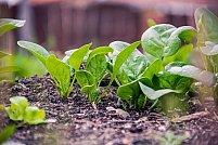 Tipuri de erbicide ecologice pentru grădina ta