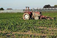 Tipuri de grape și cum se folosesc în procesul de lucrare a solului