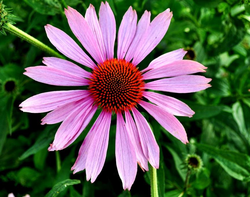 7 extracte din plante care îți întăresc sistemul imunitar