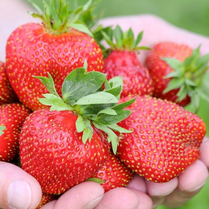 Adevărul despre Grădinamax? Au cea mai diversificată ofertă de plante de grădină?