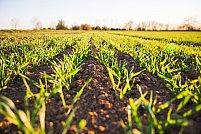 6 unelte agricole care-ti fac munca mai usoara
