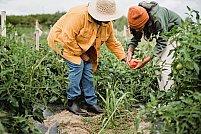 Îți dorești o recoltă mai bogată? Iată 3 avantaje ale aditivilor care conțin ingrediente naturale