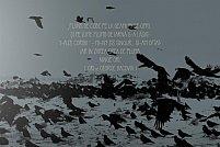 """Expoziția """"I-auzi corbii"""" semnată Ovidiu Ungureanu"""