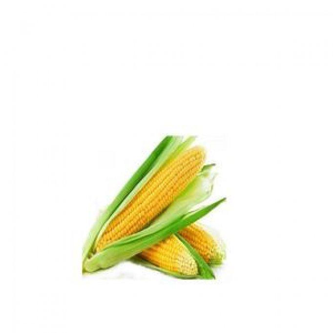 Descopera gama de seminte porumb de la esenzi.ro!